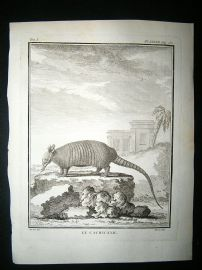 Buffon: C1770 Armadillo, Antique Print